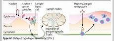 Hypersensitivity Reaction Hypersensitivity Introduction Causes Mechanism And Types
