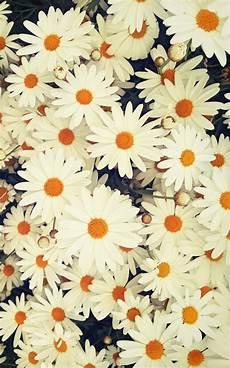 flower wallpaper we it fondos we it flowers imagui