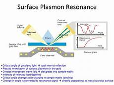 Surface Plasmon Resonance Ppt Characterisation Of Molecular Interactions Using
