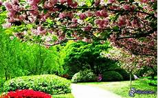 parco fiorito arbusti in fiore