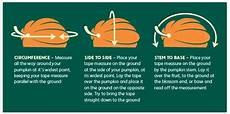 Pumpkin Weight Chart Estimating The Weight Of A Giant Pumpkin Rhs Campaign
