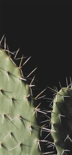 iphone 7 cactus wallpaper wallpaper cactus needles black background 5120x2880 uhd