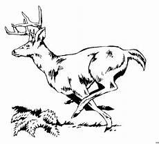 Ausmalbilder Tiere Hirsch Hirsch Am Rennen Ausmalbild Malvorlage Tiere Malvor