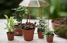 Best Plants For Low Light Terrarium How To Plant A Terrarium Glass Terrariums Terrarium Plants