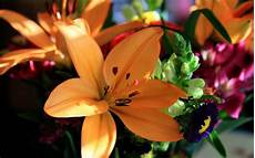 Flower Wallpaper Pictures by Flower Wallpapers Flower Backgrounds On Kate Net