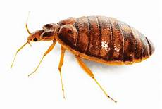 us pest home pest in nashville and middle tn
