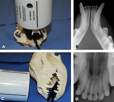 Veterinary Radiographic Positioning Chart Dental Radiology Series Techniques For Intraoral