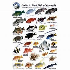 Reef Fish Identification Chart Slates Books Amp Magazines