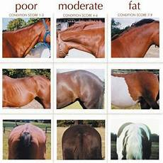 Healthy Horse Weight Chart Body Condition Scoring Horses Horse Care Horses