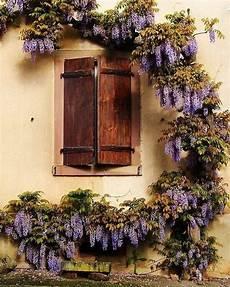 fioriere per davanzale finestra finestra glicine fioriere finestra fioriere per