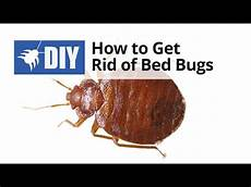 How Do You Get Bed Bugs How To Get Rid Of Bed Bugs Quick Tips Youtube