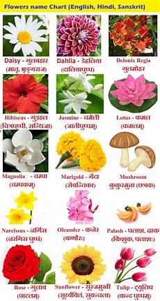Flower Chart With Names And Pictures Flowers Name In Hindi Phoolon Ke Naam Sanskrit And