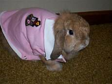 can rabbits wear clothes pethelpful
