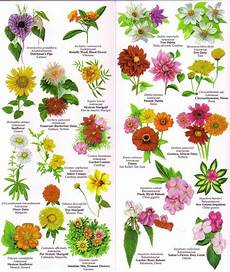 Flower Chart With Names And Pictures Flowers Chart With Names In English 195410 1 Jpg Flower