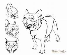 kleurplaat franse bulldog kleurplaat hond 64 gratis