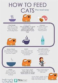 How Much To Feed A Cat Chart How To Feed Cats The Real Way Infographic Tea Amp Nail