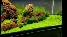 ada aquascape aquascape iwagumi style 180 litres