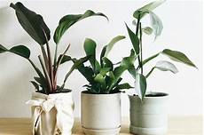 Low Light Apartment Plants Low Light Plants Are The Black Thumb S Answer To Dark