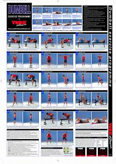 Workout Chart For Gym Pdf Dumbbell Exercise Chart Pdf Dumbell Workout Workout