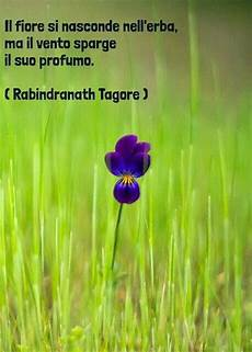 ma le canzoni come fiori 266 best images about my favourite quotes on