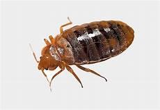 Common Household Pests Common Household Pests Hawkeye Exterminators
