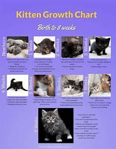 Baby Kitten Age Chart Kitten Growth Chart Newborn To 8 Weeks Cat World