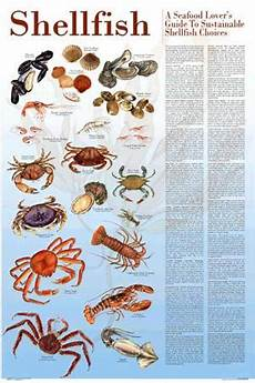Shellfish Chart Seafood Poster And Guide To Sustainable Shellfish