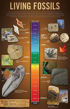 Fossil Record Chart Living Fossils Wall Chart Answers In Genesis