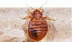 pest solutions exterminator services terminix