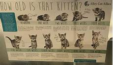 Baby Kitten Age Chart How To Age A Kitten Coolguides