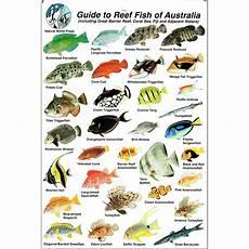 Reef Fish Identification Chart Id Slate Guide To Reef Fish Of Australia The Scuba
