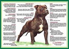 Staffordshire Bull Terrier Weight Chart Nala S Circle Of Life About Staffordshire Bull Terriers