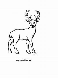 Ausmalbilder Tiere Rehe Ausmalbild Reh Kostenlos Ausdrucken