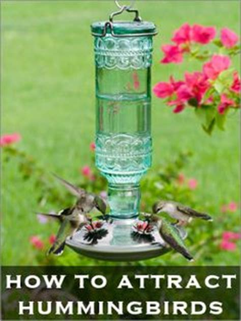 1000 ideas about hummingbird feeder homemade on pinterest