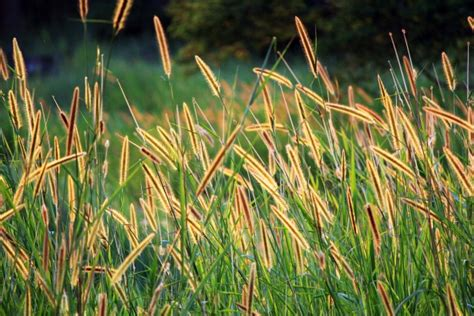 grass seed background 2 free stock photo domain
