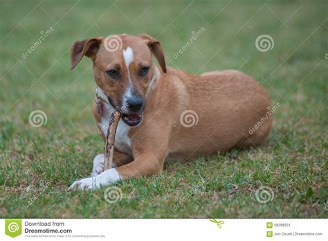 a to z finding a pet for me books mix breed lying in grass stock photo image 58268551