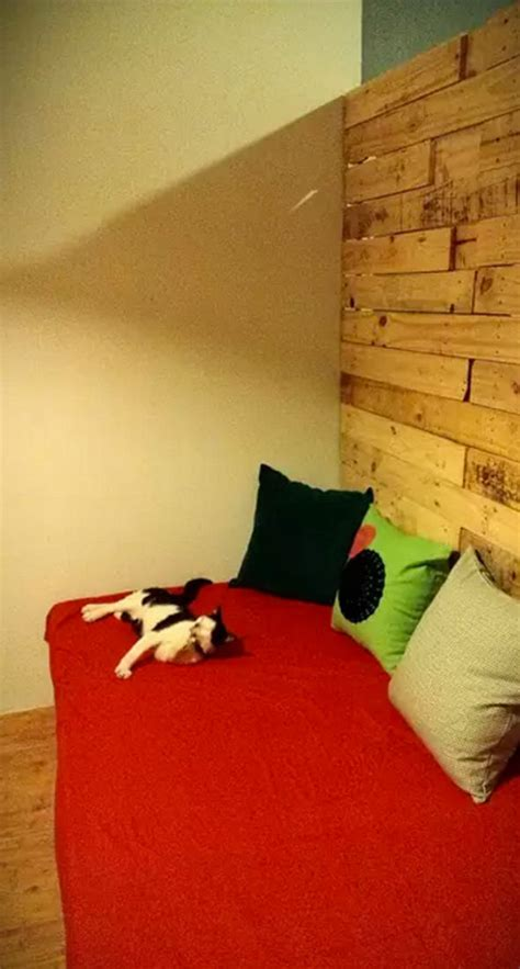 airbnb ho chi minh crazy cats of airbnb where you can holiday with a feline