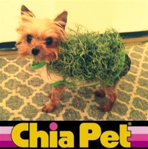 yorkie costumes yorkie costume chia pet roxie s doggie dreams