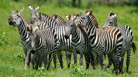 imagenes animales mamiferos fotos de animales mam 205 feros im 225 genes de mam 237 feros