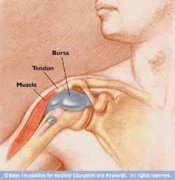 плечевой сустав подробно