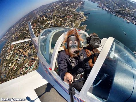 taking a on a plane orangutan flying a plane taking a selfie pictures freaking news