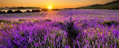 Wallpaper For Home Interiors field of flowers 20 colourful fields that catch your