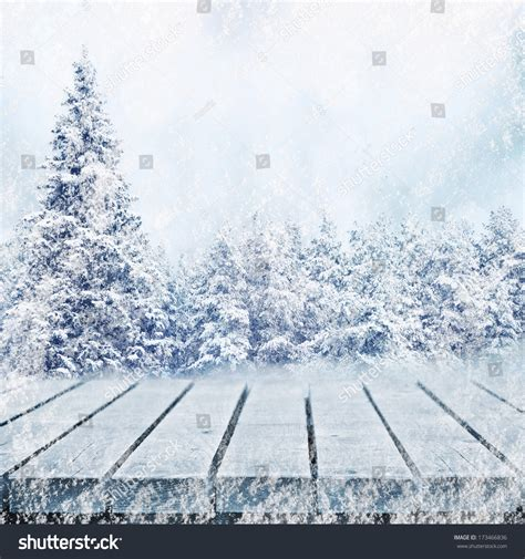 waking up in winter in search of what really matters at midlife books winter fir tree forest waking path in snow stock photo