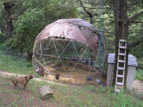 build  geodesic chicken dome home design garden