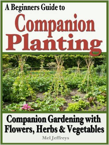 A Beginners Guide To Companion Planting Companion Beginners Guide To Vegetable Gardening