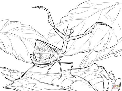 praying mantis colors dibujo de iris oratoria para colorear dibujos para