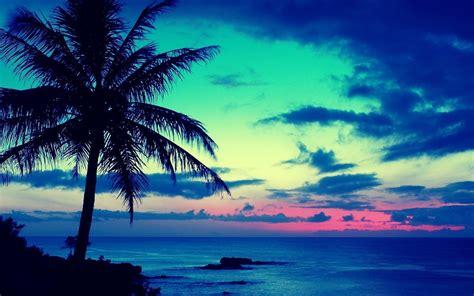 Tropical L by Tapety Na Pulpit Krajobrazy Tapeta Morze Palmy Zach 243 D