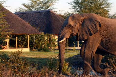syari eleghant selebrity savanna private game reserve in south africa including
