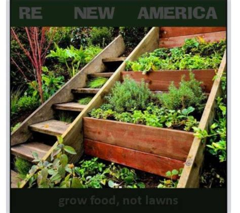 hillside garden with wooden planter boxes and vegetables