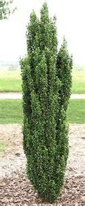 Curb Side Appeal - curb appeal on pinterest hedges front yards and landscaping